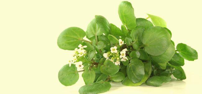 32 Benefícios surpreendentes de agrião (jal kumbhi) para a pele, cabelo e saúde