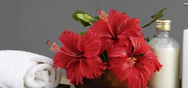 7 Maneiras surpreendentes para usar hibiscus para o seu cabelo