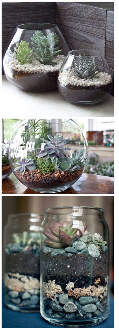 Terrariums suculentas DIY