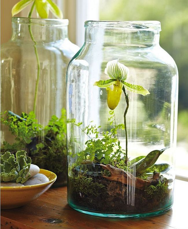 jardim Jars