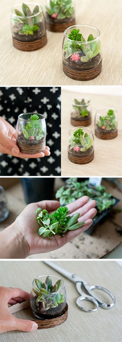 Madeira Terrariums de Base