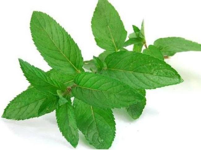 Mint para Acidez