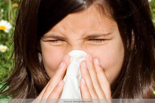 Que sofrem de alergias? Tente estes remédios de alívio naturais alergia